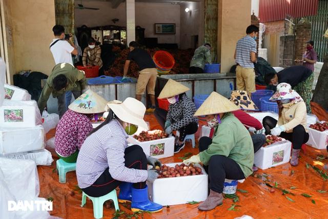 Bắc Giang: Nông dân kêu trời vì giá vải thiều lên xuống thất thường - 8