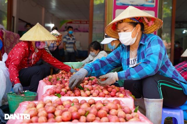 Bắc Giang: Nông dân kêu trời vì giá vải thiều lên xuống thất thường - 10