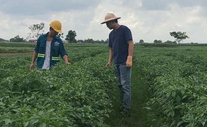Du học sinh 9X bỏ lương nghìn USD về quê chế biến nông sản sạch - 2