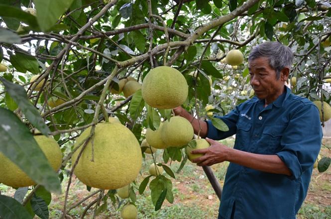 Lợi thế đặc sản vùng miền: Nông sản Việt được người tiêu dùng Nhật Bản ưa chuộng