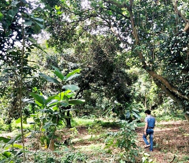 Người Sài Gòn thích bỏ phố về rừng, đất vườn hút khách - 2