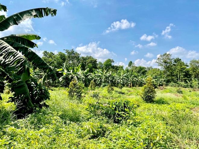 Người Sài Gòn thích bỏ phố về rừng, đất vườn hút khách - 3