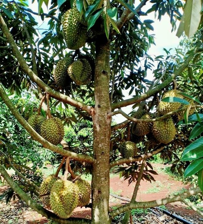Người Sài Gòn thích bỏ phố về rừng, đất vườn hút khách - 4