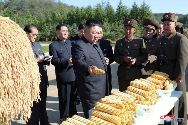 Vì sao Triều Tiên thiếu lương thực trầm trọng?