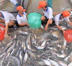 Kết quả rà soát chống bán phá giá cá tra, basa Việt Nam tại Hoa Kỳ