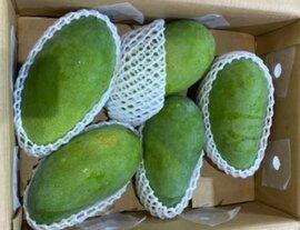 Xoài xanh Việt Nam