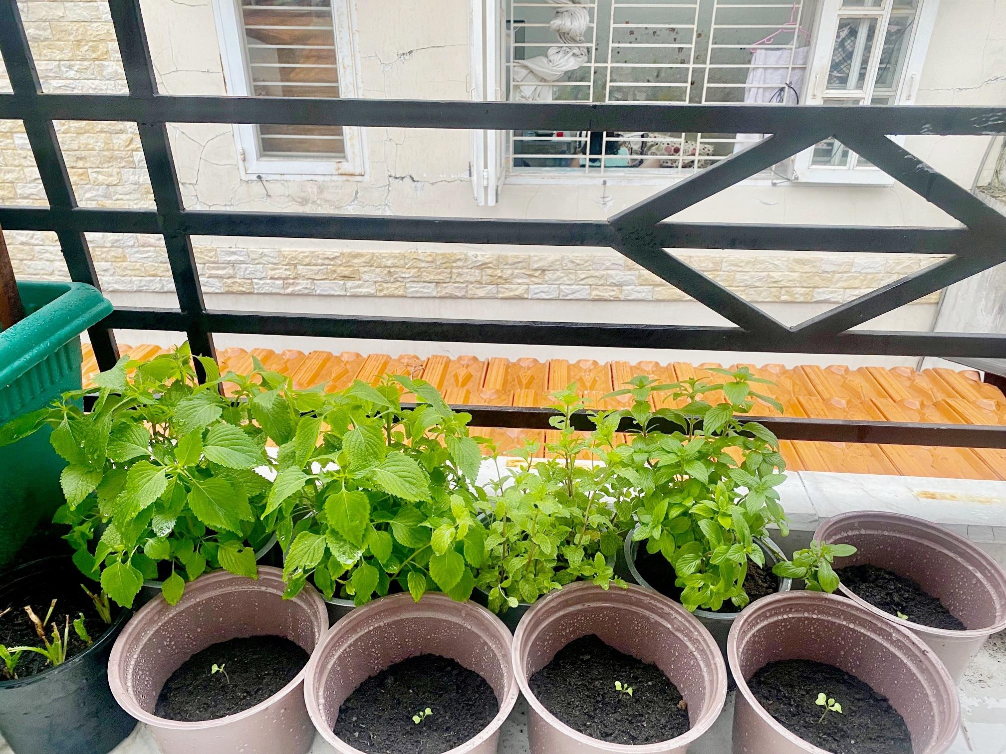Dân Sài Gòn thích làm vườn mùa dịch, giới kinh doanh cây trồng