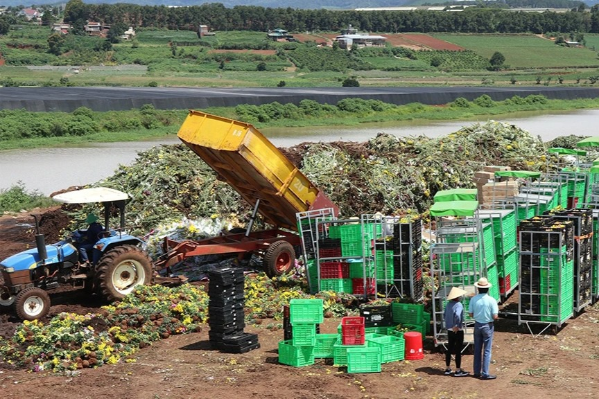 Cục Bảo vệ thực vật nói gì về 2 xe container hoa ở Đà Lạt phải tiêu hủy?
