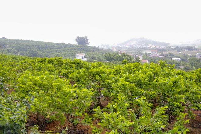 Thu hàng trăm tỷ đồng mỗi năm nhờ trồng loại quả vừa ngọt vừa dai - 1