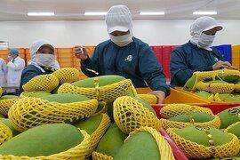 6 loại trái cây tươi của Việt Nam được phép xuất khẩu sang Hoa Kỳ