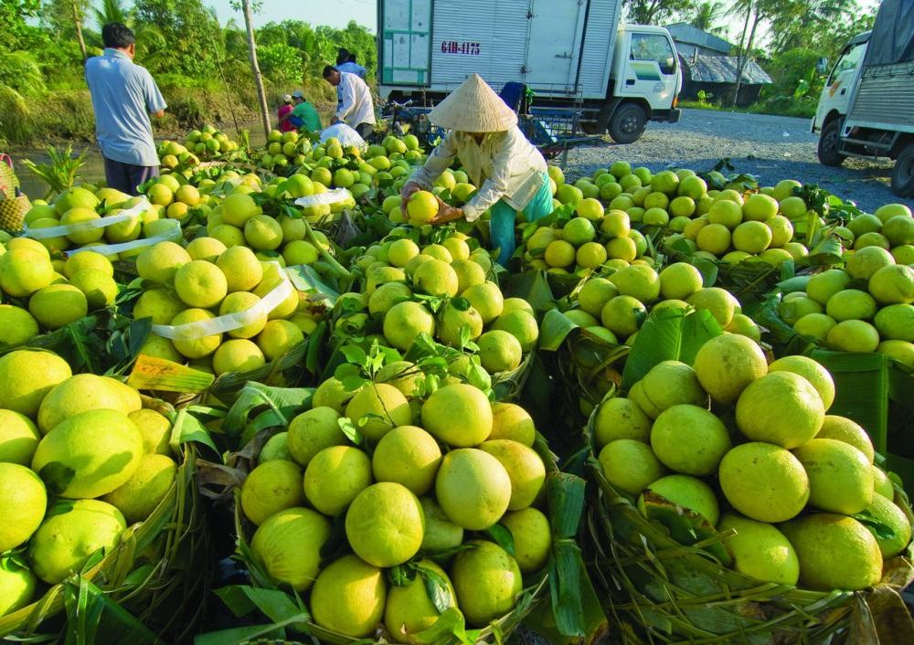 Hàng trăm nghìn tấn rau, cá, lợn, gà của các tỉnh phía Nam cần
