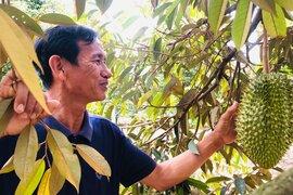Xen canh trồng cà phê và cây ăn quả, lão nông Gia Lai kiếm tiền tỷ mỗi năm
