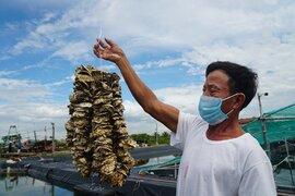 Người nuôi trồng thủy sản gặp khó vì dịch Covid-19