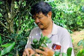 Nông dân vùng cao nguyên giàu lên nhờ trồng cây