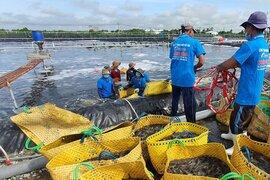 Doanh nghiệp thủy sản ở Sóc Trăng đã có hơn 60% công nhân trở lại nhà máy