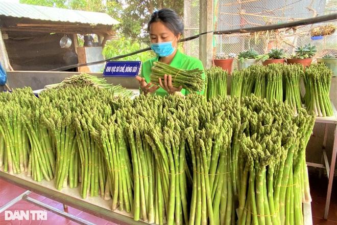Chặt cà phê, trồng rau hoàng đế, 9X thu 6 triệu đồng mỗi ngày - 3