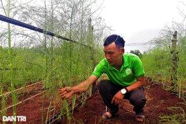 Chặt cà phê, trồng