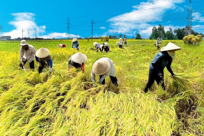 Ngành nông nghiệp hút 750 nghìn tỷ đồng vốn đầu tư