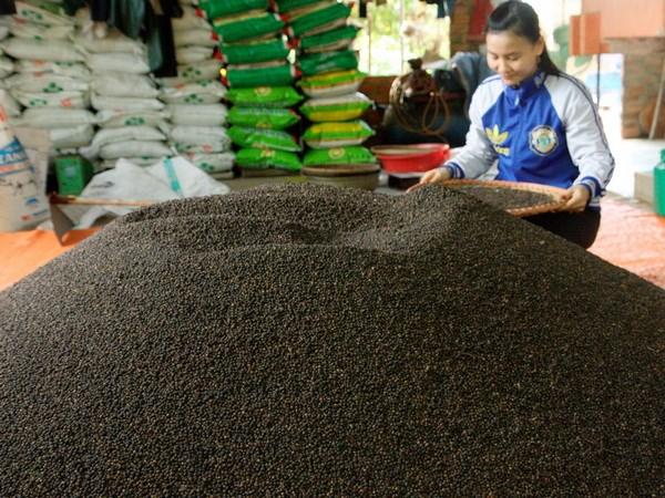 Giá hạt tiêu tại tỉnh Đồng Nai tăng 30.000 đồng mỗi kg