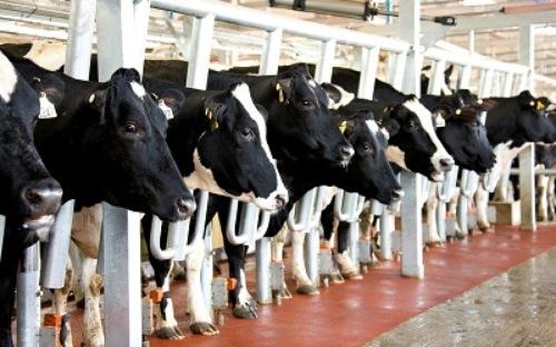 Việt Nam là một trong 20 nước nhập sữa nhiều nhất
