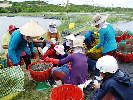 Báo động tình trạng lệ thuộc của thủy sản Việt Nam vào Trung Quốc