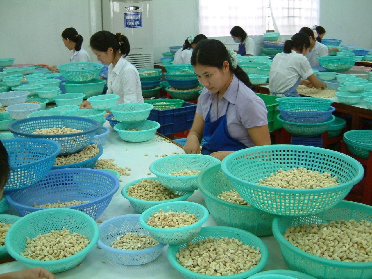 Xuất 1 triệu tấn hạt điều: Nguyên liệu nhập tới 40%