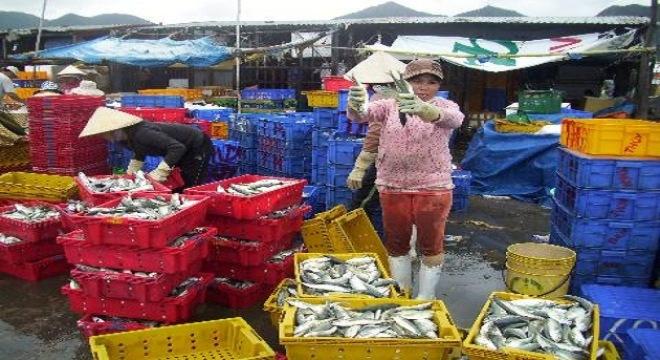 Trúng mùa cá nục