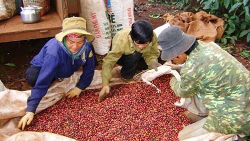 NĐT ngoại phản ánh ngành cà phê cạnh tranh không công bằng