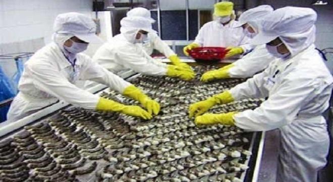 Ngành xuất khẩu tôm sẽ bứt phá