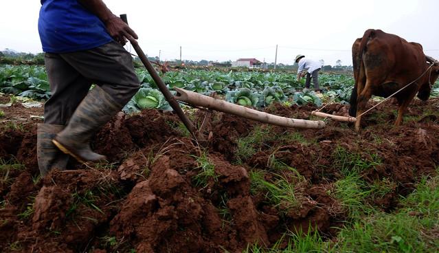 Báo ngoại viết về Luật đất đai mới của Việt Nam