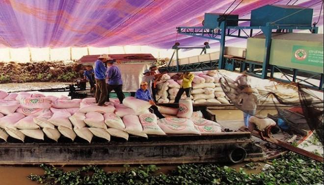 Xuất khẩu gạo: Tính hoài vẫn hẹp cửa ra