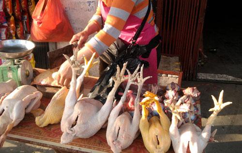 Phát hoảng đặc sản gà Đông Tảo từ gà già thải loại