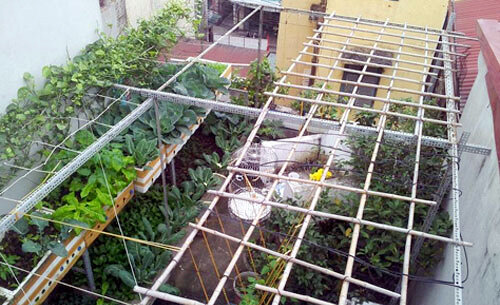 Chơi sang bậc nhất: Thuê kỹ sư chăm vườn rau tại nhà