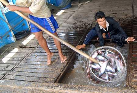 Nga cấm nhập khẩu cá tra Việt Nam