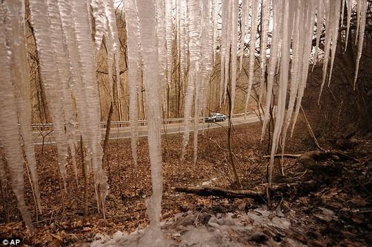 Nước chảy xuống từ trên cây bị đóng thành những cột băng.