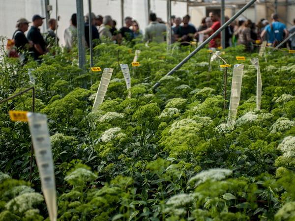 Mỹ ban hành đạo luật nông nghiệp trị giá hơn 950 tỷ USD