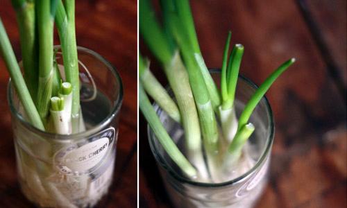Độc chiêu trồng rau Thạch Sanh, ăn hết lại có