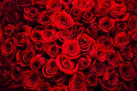 Dân Bắc Mỹ dự kiến chi 3,7 tỷ USD cho Valentine