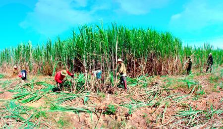 Đại gia Việt dấn thân: Khắp đất Phi trời Mỹ