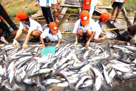 Luật Nông Trại Mỹ chưa ảnh hướng đến xuất khẩu cá tra trong năm nay