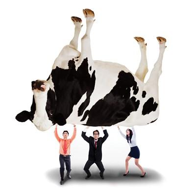 Doanh nghiệp sữa Việt Nam: Chạy đua nguồn nguyên liệu