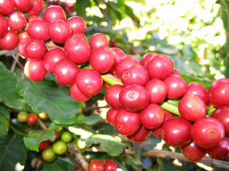 Thế giới ngày càng chuộng cà phê Việt Nam