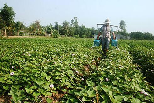 Hệ lụy từ việc thương lái nước ngoài mua gom nông sản