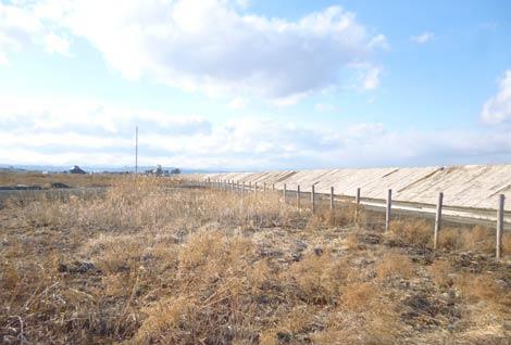 Kỷ niêm 3 năm sóng thần Nhật Bản: Miyagi, mùa anh đào trổ bông