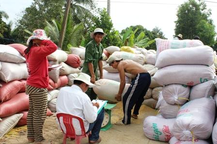 Giá lúa bắt đầu tăng nhẹ