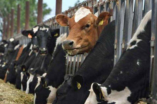 Nhập khẩu gia súc sống của Úc tăng...1.800%!