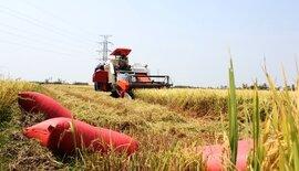 Thu chục triệu đồng mỗi ngày nhờ chạy đồng cắt lúa mướn