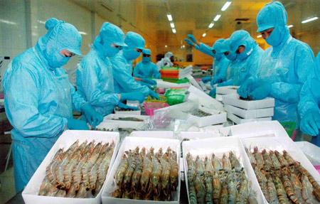 Xuất khẩu tôm sang Trung Quốc tăng mạnh: Mừng ít, lo nhiều