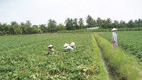 Ngăn chặn thương lái Trung Quốc ồ ạt mua nông sản: Phải từ gốc