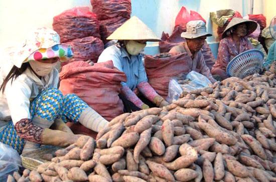 Thương lái Trung Quốc gom mua nông sản, Bộ Công thương làm gì?